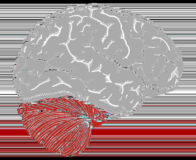 Selbstdisziplin lernen - Reptiliengehirn