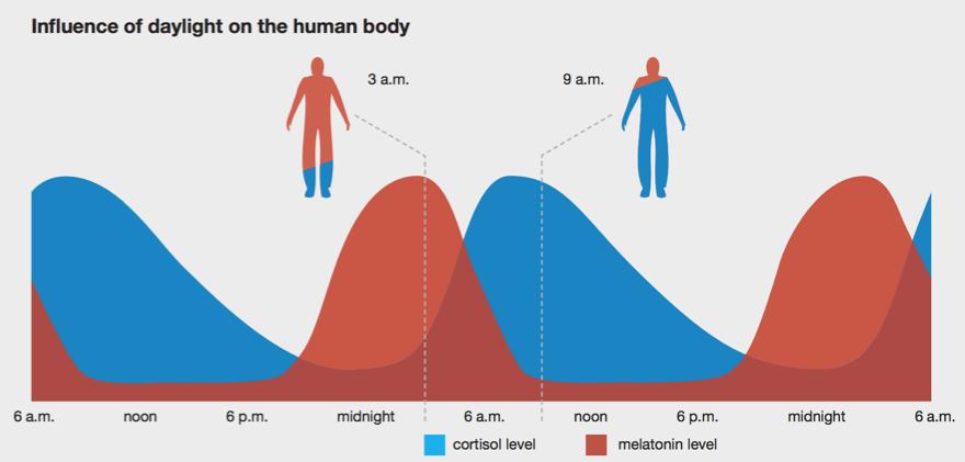 Besser Schlafen Tipps - Tageslicht und Auswirkung auf Melatonin und Cortisol
